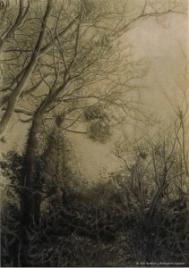 Tim Walton Trees 1_nwm