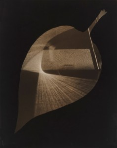 György Kepes, 1906-2001 Leaf and Prism 1938 Photograph, gelatin silver print on paper 348 x 277 mm © estate of György Kepes