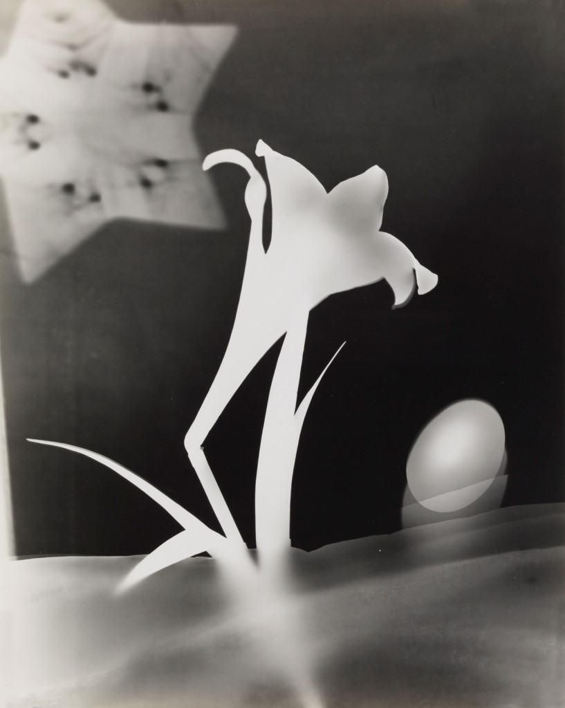 György Kepes, 1906-2001 Lily and Egg c. 1939 Photograph, gelatin silver print on paper 355 x 284 mm © estate of György Kepes