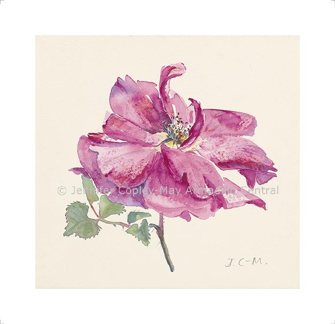 Rose, fine art print, 235 x 240 mm