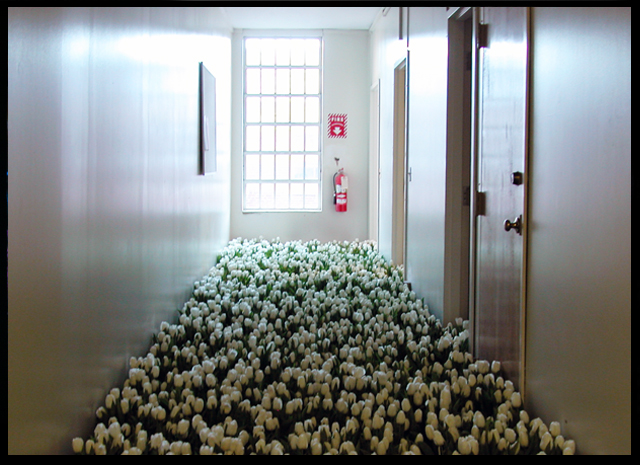 BLOOM BY Anna Schuleit - the Child Psychiatry unit with white tulips, photo John Gray