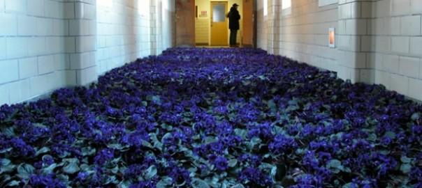 Bloom by Anna Schuleit